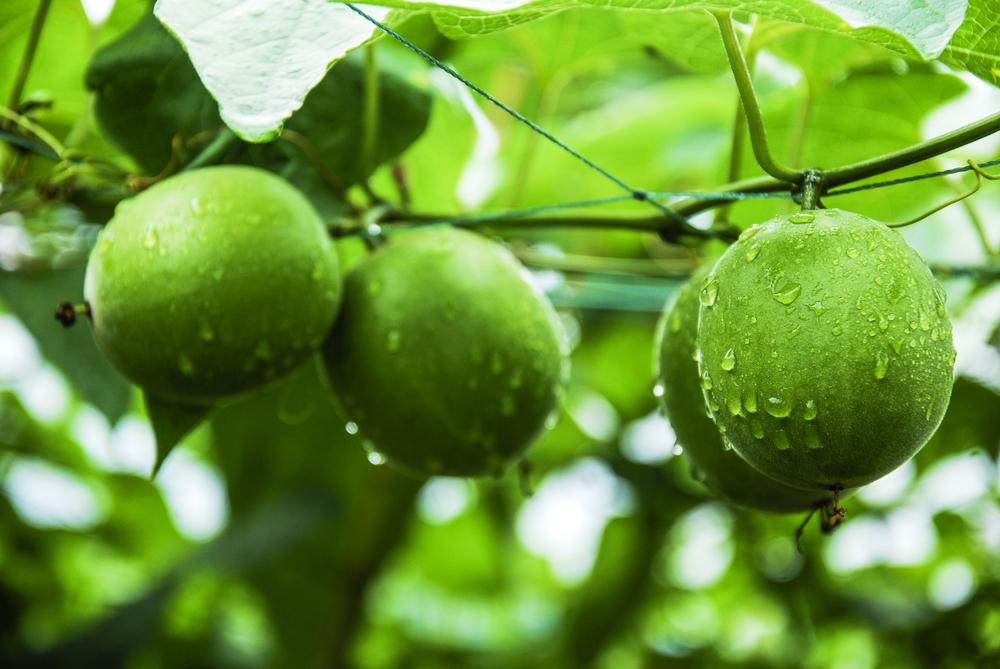 現代人を救う夢の果実・神果のミラクルパワー